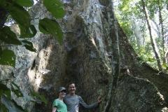 Riesenbaum - Cachichira: Forscher haben das Alter des 50 Meter hohen Baum auf 285 Jahre geschätzt!