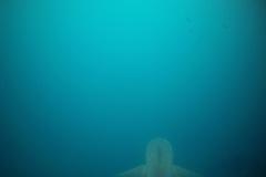 Galapagos-Haie