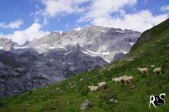 Grossschärhorn - eine mächtige Kalkgestalt