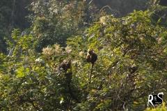 Eine Horde wilder Affen in einem wahrscheinlich eingeschlossenen Ökosystem