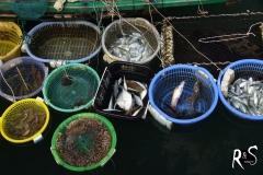 schwimmender Fischmarkt I