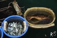 schwimmender Fischmarkt II