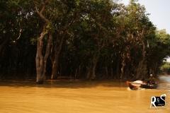 Wald unter Wasser