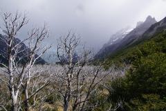 abgebranntes Waldstück