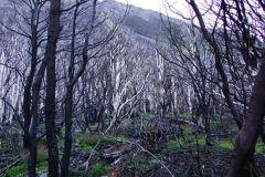 abgebrannter Waldabschnitt - tragisch, aber dennoch ein spannendes Bild
