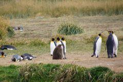 Pinguinenleben - ausspannen, berichten oder zuschauen