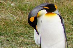 Pinguinen-Paar