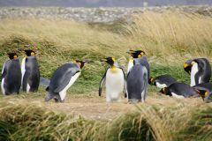 Unstimmigkeiten unter Pinguinen