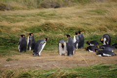 Unstimmigkeiten unter Pinguinen II