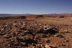 ein paar grüne Tupfer in der trockensten Wüste der Welt!