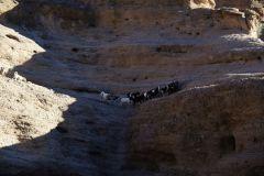 ...Ziegen, die auf den Felsen rumturnten.