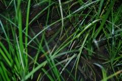 by night junger Alligator gefunden!