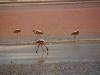 James Flamingos