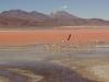 von den Algen blutrot gefärbte Lagune