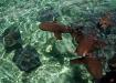 Ammenhaie und Stechrochen in der stingray & shark alley vor Caye Caulker's Küste