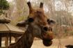 im Zoo Chiang Mai