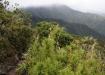 Mirador nach ca. einer Stunde Aufstieg vom Refugio Podocarpus