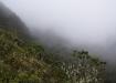 der Nebelwald macht seinem Ruf alle Ehre
