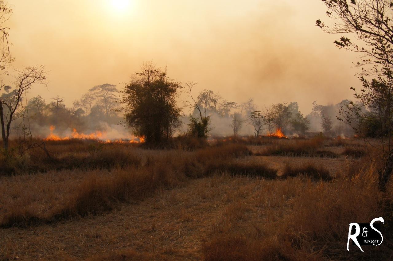 Waldbrände - spontan oder Brandrodung?