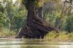 von der Strömung gezeichnet - die Wurzeln wachsen flussabwärts