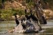 eine Horde Kormorane auf einer der unzähligen Mekong-Inselchen