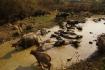 Wasserbüffel-Schlammbad