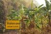 ..hinter den Bananenstauden