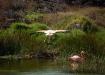 Flamingos auf Galapagos: entsprechend ihrer Ernährung von Shrimps ergibt sich ihre Färbung.