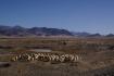Schafhirten unterwegs mit ihren Herden - 85% der tibetischen Bevölkerung ist in der Landwirtschaft & Viehzucht beschäftigt.