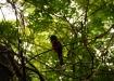 ein seltener Vogel, leider können wir seinen Namen nicht mehr rekonstruieren