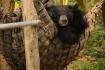 ..auch in der Bären-Hängematte lebt sich's gemütlich!