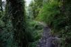 bemerkenswerte Vegetation auf 2500m