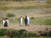Gesprächsrunde unter Pinguinen