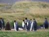 Pinguinenleben auf dem chilenischen Tierra del Fuego