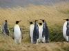 schnatternd geht's bei der Ankunft der satten Pinguine zu und her!