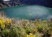 Bergwiesen wie in den Schweizer Alpen - Vegetationsart ist nur ca. 2500m Höher als bei uns zuhause