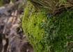 schöne Pflanzen allenthalben