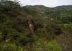 mitten im Rumi Wilco Reservat - viele verschiedene Pflanzen sind in steilem Gelände zu beobachten