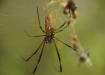 überall hat's Spinnen, überall muss man unter den grossen Spinnennetzen durchkriechem