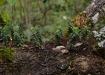 ...ein kleines eigens Ökosystem auf ein paar Quadratcentimeter auf einem Ast...