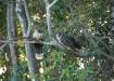 die Paradiesvögel Serere, welche dem Reservat den Namen geben.