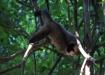 akrobatisch...