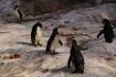 Die Pingus scheinen zu frieren