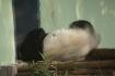... der Panda aber schon..