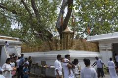 quierliges Treiben rund um Sri Maha Bodhi