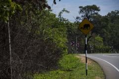 Elefanten könnten uns den Weg abschneiden...