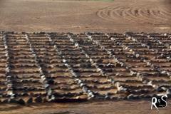 Kampf gegen Erosion II