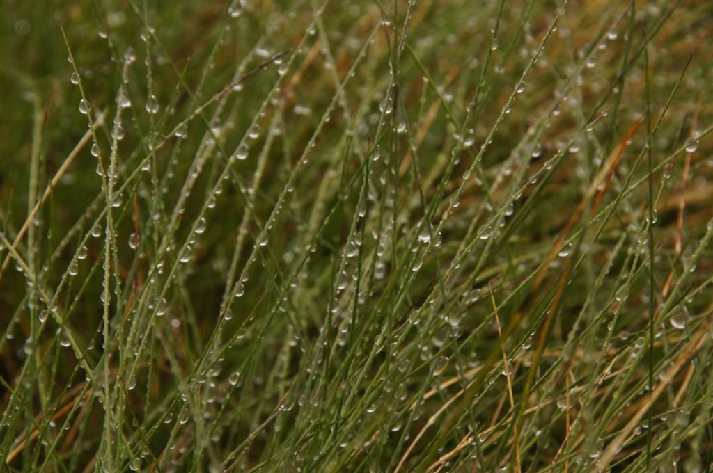 ..was auch diese schönen Gräser zeigen.