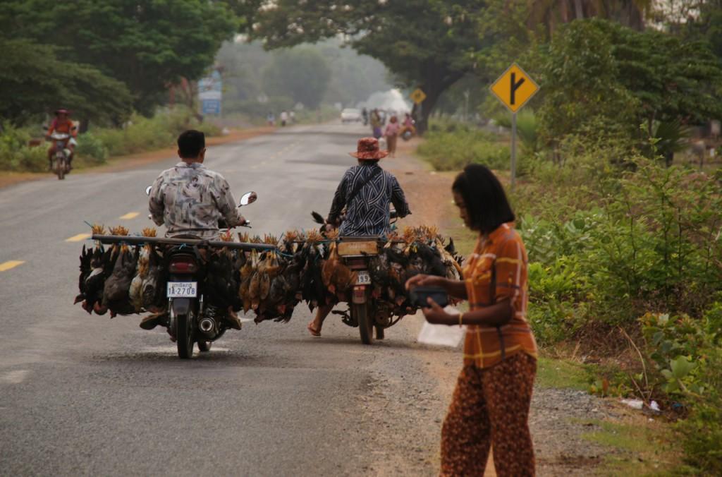Chicken-Transport - mittlerweile gewohntes Bild, doch immer wieder schockierend, wenn man darüber nachdenkt, dass die Tiere immer lebend transportiert werden.