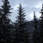 Heimeliges Szenenbild - frisch verschneite Tannen!